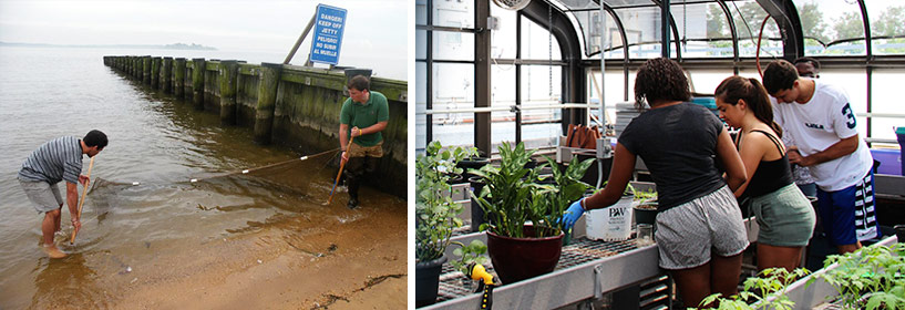 Collage of environmental studies including beakers and students in a greenhouse