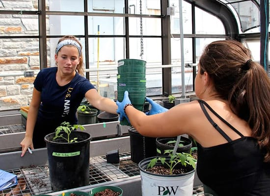 Students working with planting pots in a greenhouse