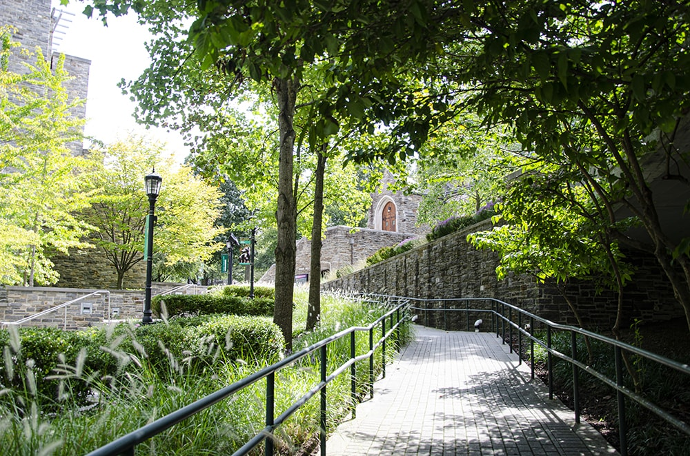 A stone walkway surrounded by lush greenery leading to Sellinger Hall