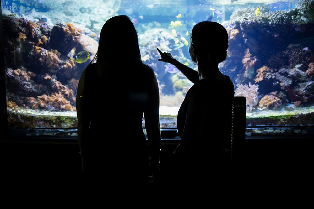 Silhouettes of two students behind a glass aquarium exhibit where fish and rocks can be seen