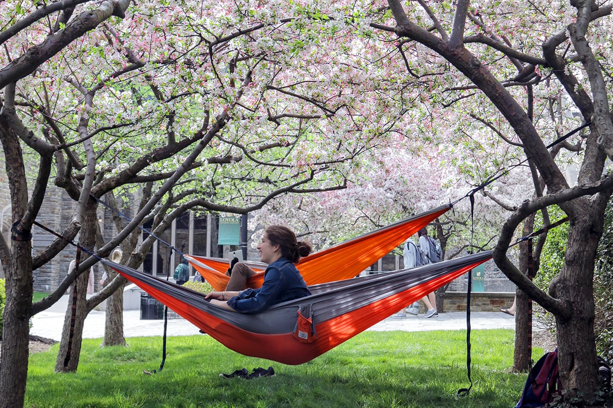 A student sits in a hammock under trees in full bloom on the quad