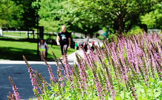Purple flowers with students talking in the background